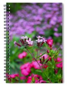 Soapwort And Pinks Spiral Notebook
