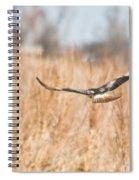 Soaring Hawk Over Field Spiral Notebook