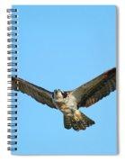 Soaring Osprey Spiral Notebook