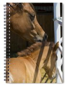 Socializing Amongst Horses Spiral Notebook