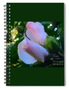 Soft And Gentle Rose Of Sharon Spiral Notebook