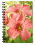 Soft And Peachy Smiles Spiral Notebook