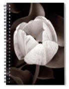 Soft And Sepia Tulip Spiral Notebook