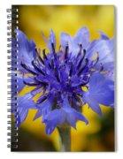 Soft Bachelor Button Spiral Notebook