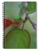 Soft Branch Spiral Notebook