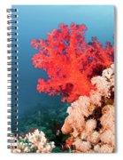 Soft Coral  Spiral Notebook
