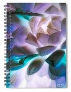 Soft Glow Succulents Spiral Notebook