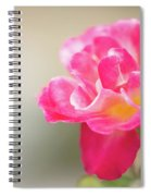 Soft As A Whisper Of A Hot Pink Rose Spiral Notebook