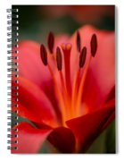 Soft Intimate View Spiral Notebook