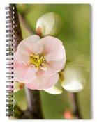 Pink Quince Blossom Spiral Notebook