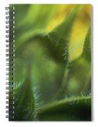 Softabstractsunflower Spiral Notebook