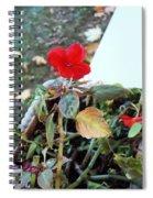 Sole Survivor Spiral Notebook