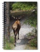 Solitary Stroll Spiral Notebook