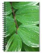 Solomon's Dew Spiral Notebook