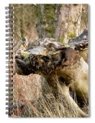 Something About A Dragon. Spiral Notebook