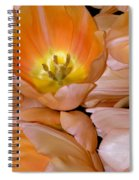 Somewhat Peachy Spiral Notebook
