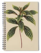 Sonerila Margaritacea Spiral Notebook