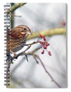 Song Sparrow Spiral Notebook