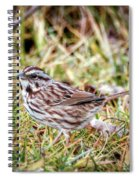 Song Sparrow Sweetie Spiral Notebook