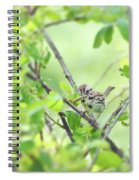 Song Sparrow With Dinner Spiral Notebook