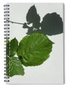 Sophisticated Shadows - Glossy Hazelnut Leaves On White Stucco - Horizontal View Left Down Spiral Notebook