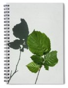 Sophisticated Shadows - Glossy Hazelnut Leaves On White Stucco - Vertical View Upwards Left Spiral Notebook