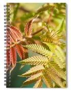 Sorbaria Sorbifolia Spring Foliage Spiral Notebook