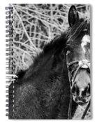 Soul Mate Spiral Notebook