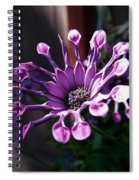 South African Daisy Spiral Notebook