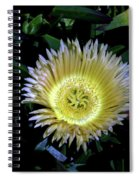 South African Flower 1 Spiral Notebook