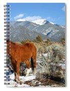 South West Ginger Spiral Notebook