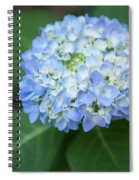 Southern Blue Hydrangea Blooming Spiral Notebook
