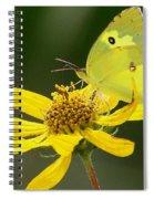 Southern Dogface Butterfly Spiral Notebook