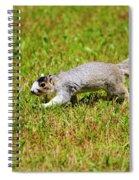Southern Fox Squirrel Spiral Notebook