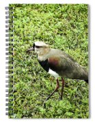 Southern Lapwing Spiral Notebook