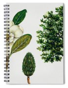 Southern Magnolia Or Bull Bay  Spiral Notebook