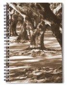 Southern Sunlight On Live Oaks Spiral Notebook