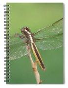 Spangled Skimmer Dragonfly Female Spiral Notebook