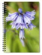 Spanish Bluebells 7 Spiral Notebook