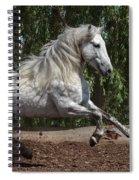 Spanish Dancer Spiral Notebook