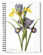 Spanish Iris Spiral Notebook