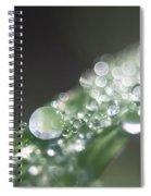 Sparkling Dew Spiral Notebook