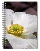 Sparkling White Anemone Spiral Notebook