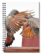 Sparring Flickers Spiral Notebook