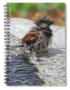 Sparrow Bath Time 9242 Spiral Notebook