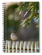 Sparrow In Colonial Williamsburg Spiral Notebook