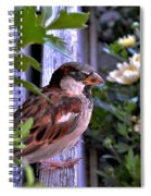 Sparrow In The Shrubs Spiral Notebook