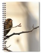 Sparrow On A Limb Spiral Notebook