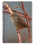 Sparrow On Grape Vine Spiral Notebook