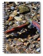 Spawning Salmon - Odell Lake Oregon Spiral Notebook